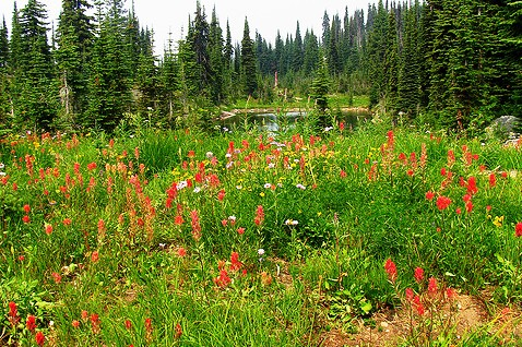 canadian adventure -alpine meadow