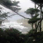 Wild Pacific Trail Photo
