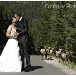 Just Married in the Canadian Rockies
