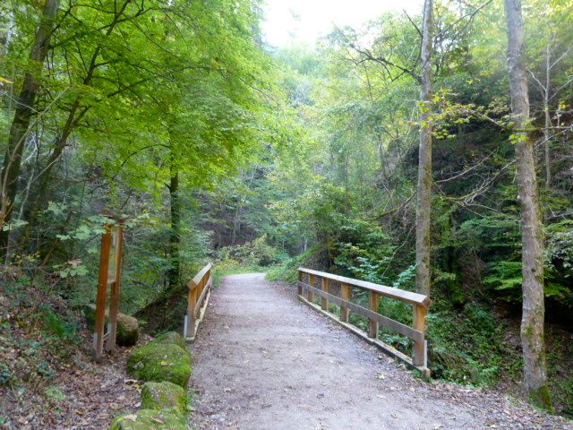 The forested path and part of the pilgrimage to Andechs.