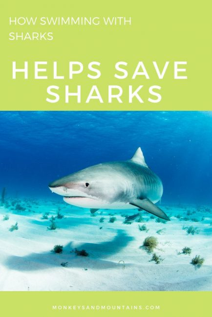 how swimming with sharks can help save sharks