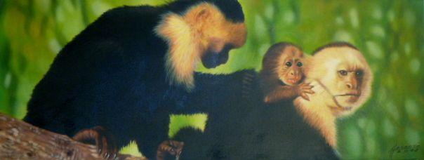 travel memories monkeys
