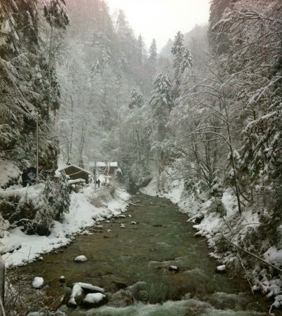 Snow covered trees and river in Garmisch-Partenkirchen