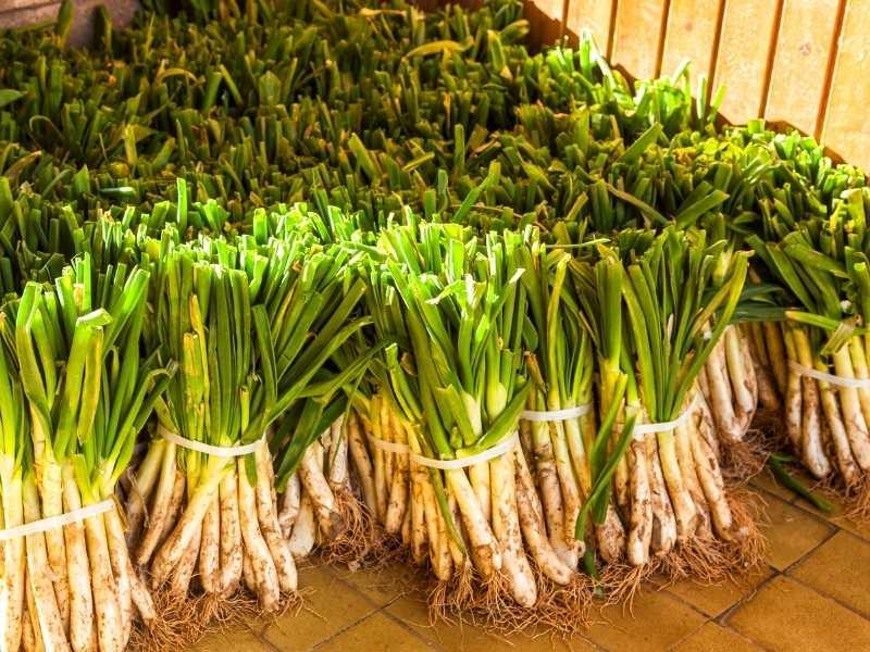 fresh calcots