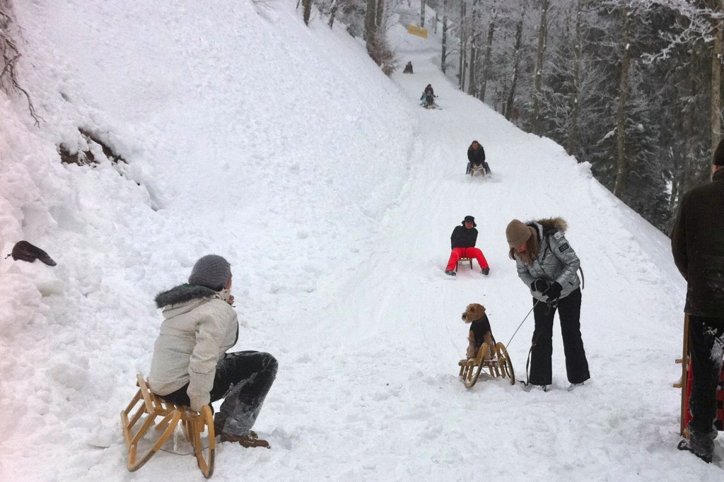 A nervous dog goes for a ride on a sled.