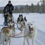Finding Peace while Dog Sledding in Iso Syote, Finland