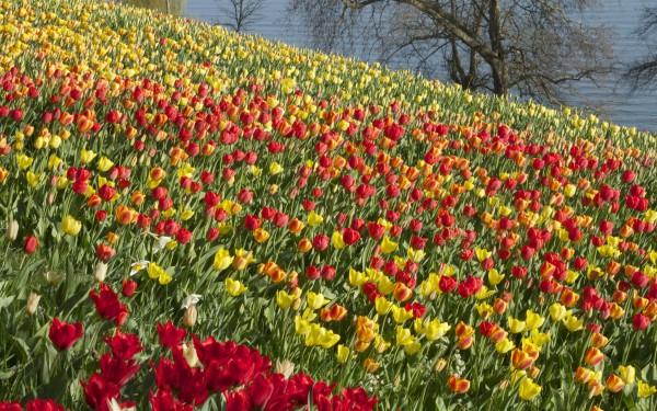 Blumen Insel in Mainau, Germany