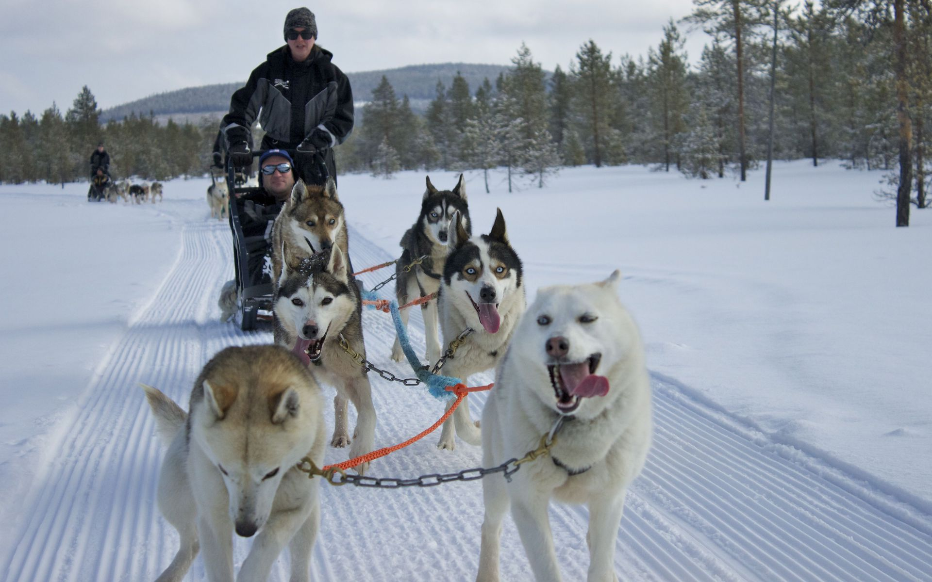winter activites in Iso-Syöte include dog sledding
