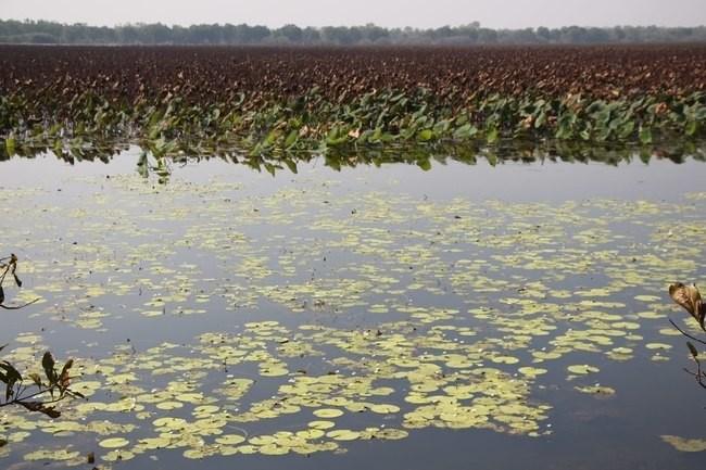 become a better photographer Mamukala Wetlands