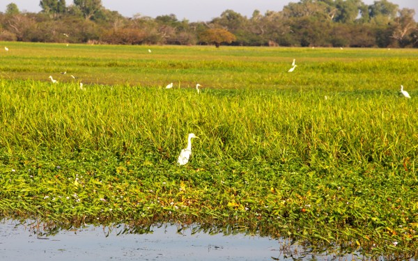 yellow water cruises white birds