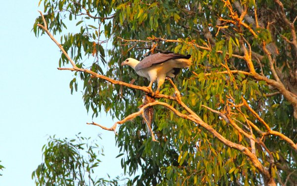 yellow water cruises kakadu bird with fish