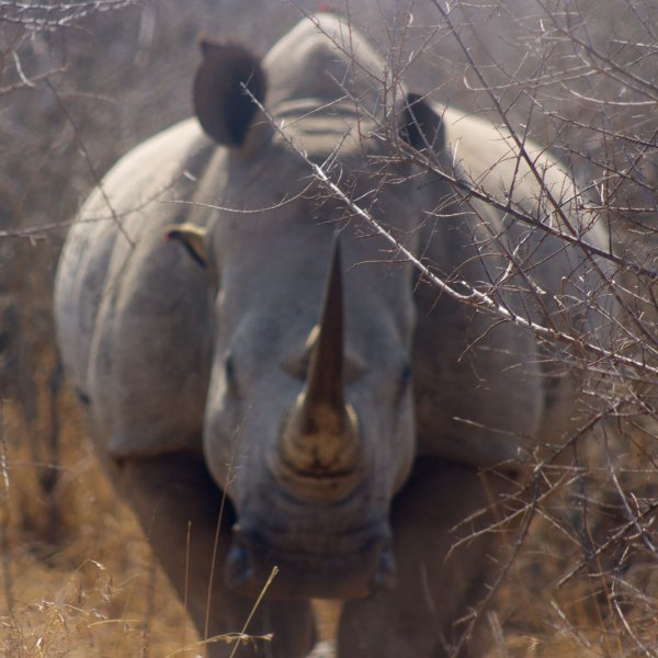 Observing rhinos was one of the highlights of my trip.