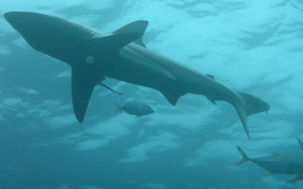 The shark dives were a big part of my African adventure in South Africa