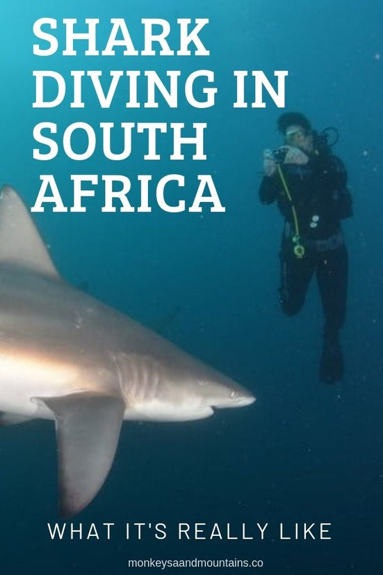 diving with sharks in Protea Banks and Aliwal Shoal in South Africa