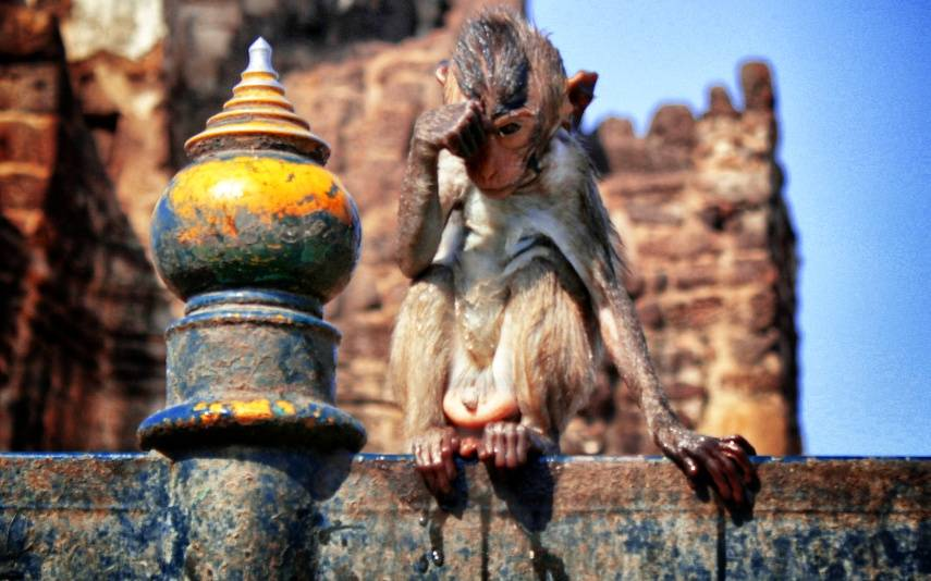 soaked monkey in Lopburi, Thailand