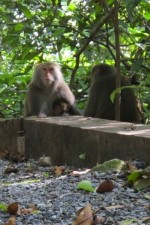 monkeys in Taiwan