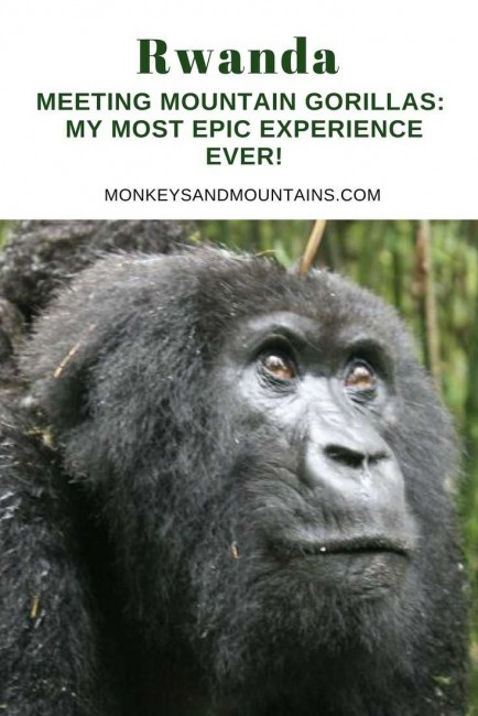 Meeting Mountain Gorillas_ My Most EPIC Experience Ever!