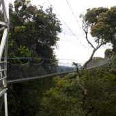 canopy tour and hike in Nyungwe Forest in Rwanda