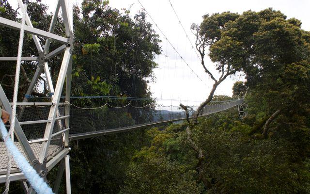 Nyungwe Forest canopy tour in Rwanda