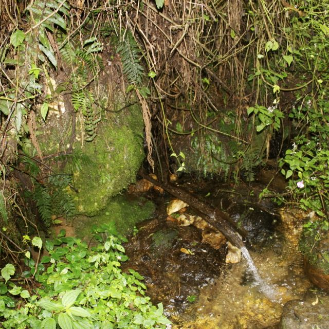 Source of the Congo River in Nyungwe Forest in Rwanda
