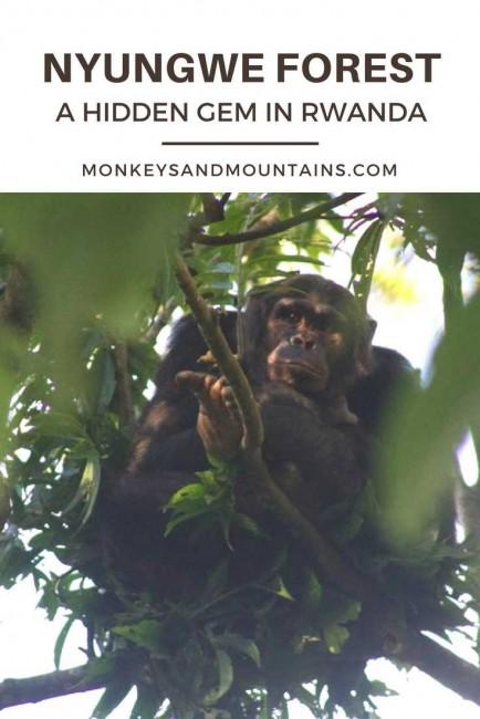 Nyungwe Forest A Hidden Gem in Rwanda