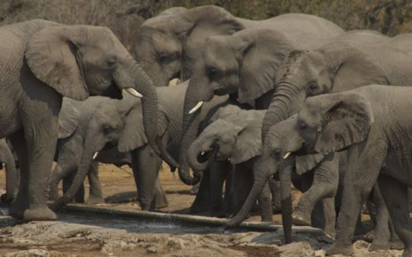 Herd of elephants at a waterhole in Etosha National Park, Namibia