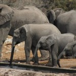 Elephants of Etosha National Park:  A Photojourney