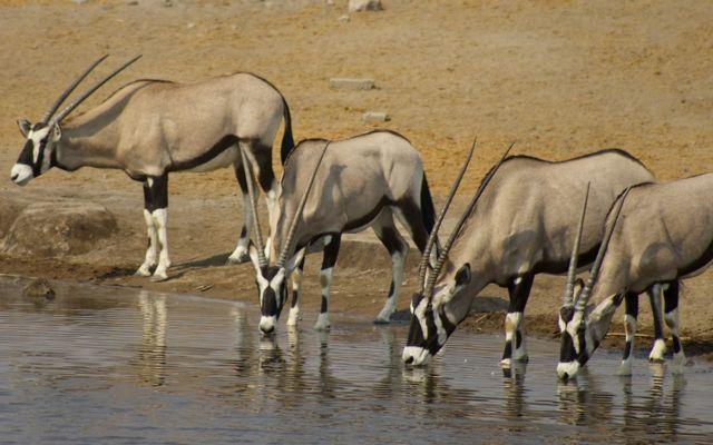 Waterholes of Etosha National Park, Namibia