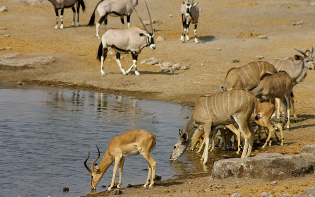 An array of animals at the waterhole