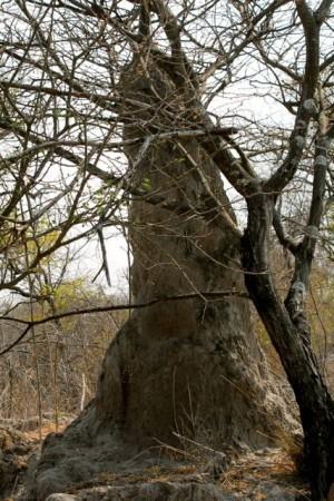 Namibia bush termite mound