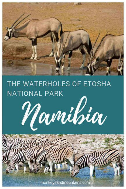 the best spot to spot wildlife in Etosha National Park is at the waterholes
