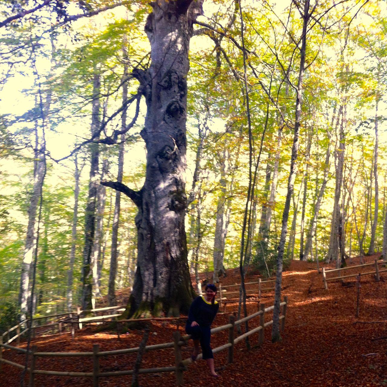 Visit the gigantic tree in Montedimezzo Nature Reserve