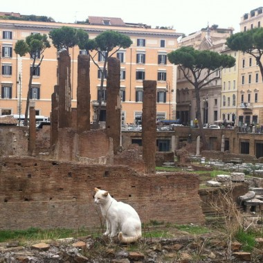 torre argentina cat and ruins rome3