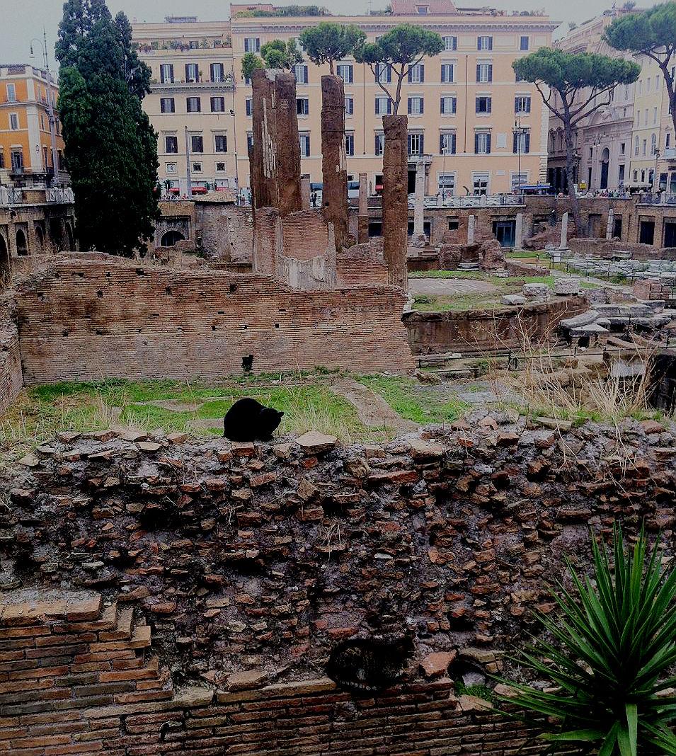 Black rescue cat in Rome