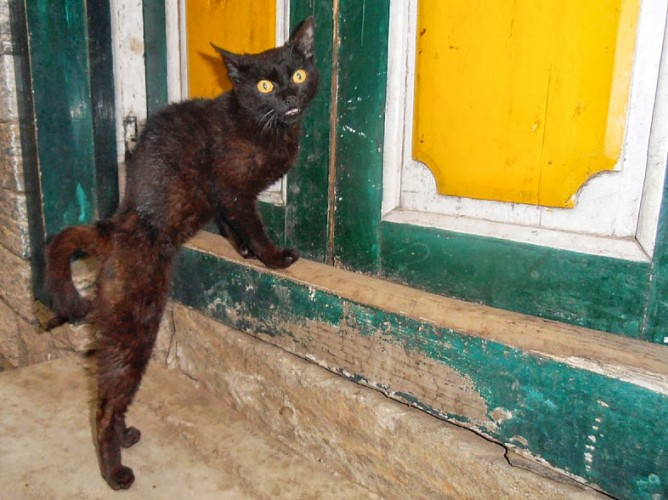 A cat at the door of our accommodation at the end of our EBC Trek