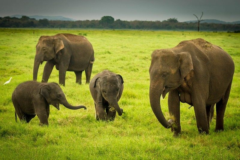 Adventure Travel - Elephant family at Kaudulla National Park in Sri Lanka