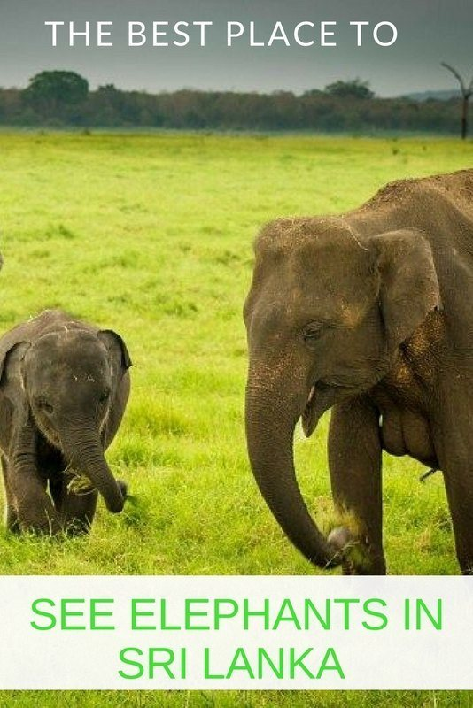 The best places to see elephants in Sri Lanka.