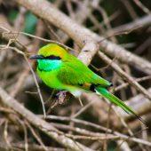 Sri Lanka is a great option for birders.