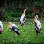 birds of Sri LankaIMG_0736a3