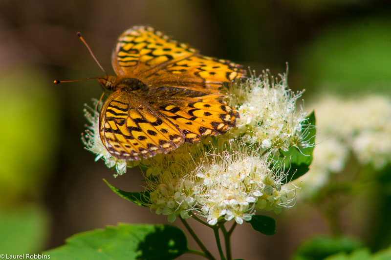 rare and endangered butterflies can be found in the Castle Wilderness. It's a nature lover's paradise!