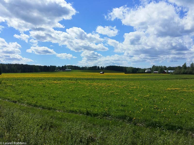 landscape of eastern Finland, seen while cycling the Iron Curtain Trail
