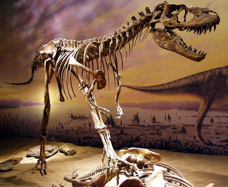 Albertosaurus in Drumheller Alberta Badlands