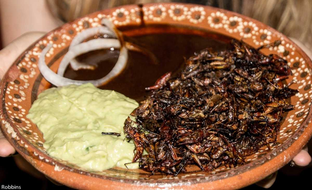 feeling adventurous? try fried insects when in Mexico