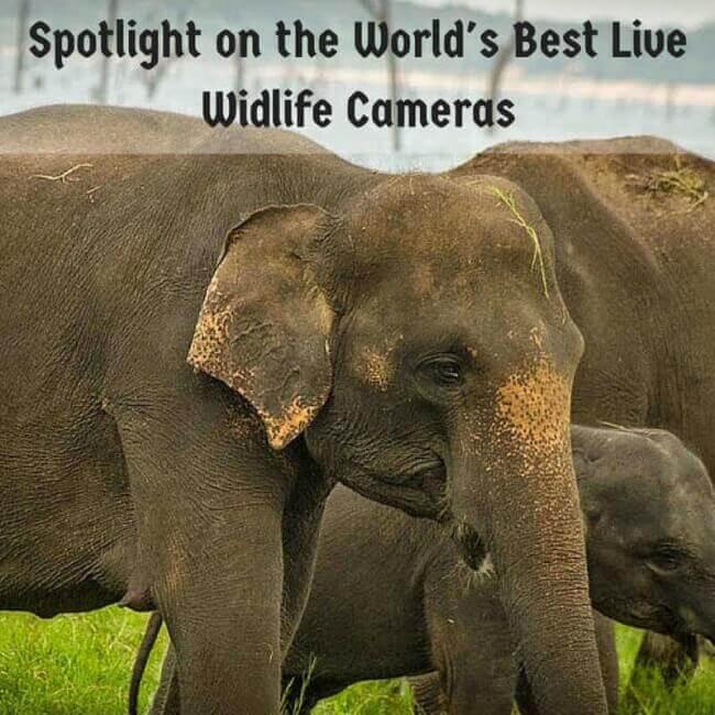 Spotlight On The World's Best Live Wildlife Cameras
