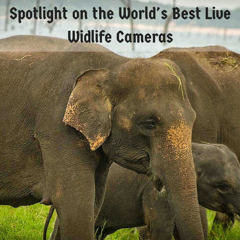 Best Live Wildlife Cameras for when you can't travel