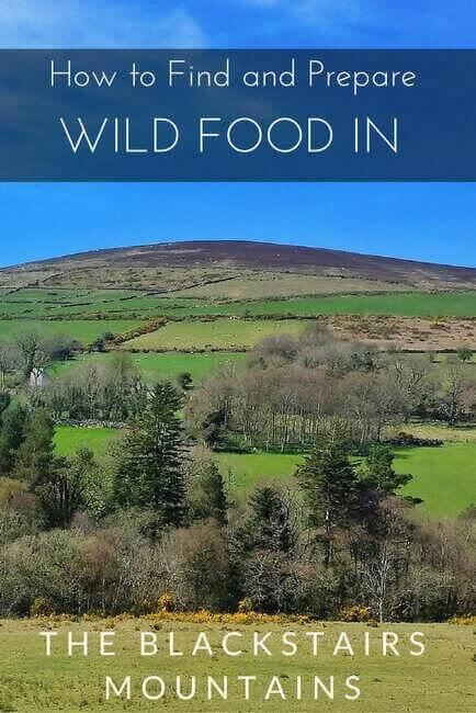wild-food-blackstair-mountains-ireland
