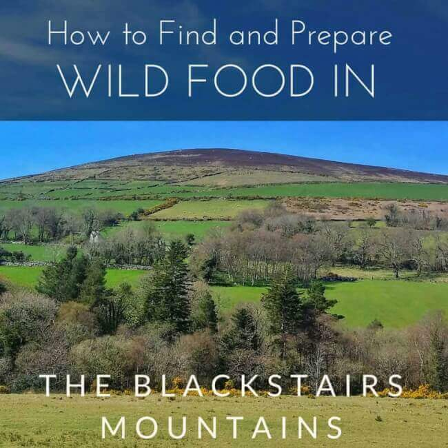 foraging for wild food in the Blackstairs Mountains, Ireland