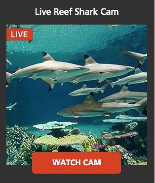 wildlife shark camera
