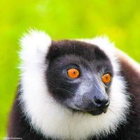 observe lemurs on our Madagascar Ecotour