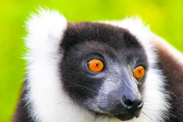 observe lemurs on our Madagascar Ecotour